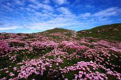 Shetland Islands Scotland   Shetland Islands, Scotland