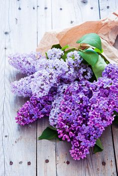 Lilacs | by letterberry°°
