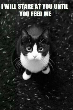 This cat is the spitting image of my last feline. She did great passing away at the age of 20.