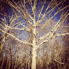 #WonderWatch 2015-17 Fine Filigree #TreesPlease 4
