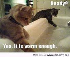 Afbeeldingsresultaat voor funny animals quotes