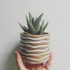 "Newbie succulents getting planted for the last weekend of Renegade Craft Fair.  This succulent is a haworthia type more commonly referred to as a ""zebra plant."" It's one of my faves.  The carving is also new.  Waves for the summer."