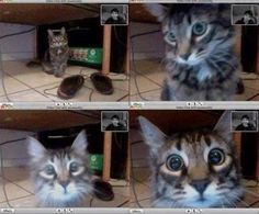 Cat recognises his owner in a video chat http://ift.tt/2xFrbFv