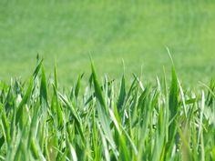 Giardini, parchi urbani, fasce erbose ai bordi delle strade hanno bisogno di una certa manutenzione, affinchè l'erba no ndiventi eccessivamente alta, le pi