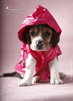 Get ready alarm weather! I found a raincoat in my closet!