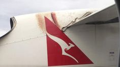 """Real Tiny Snake Found On A Plane, Force Emergency Landing In Sydney - Remember the movie """"Snakes On A Plane"""" where after the plane takes off, a lot of venomous snakes started to come out from the cargo and spread all over the plane? Well that was a movie only, but this time a real tiny snake was found on a plane for which the plane was forced to emergency landing in Sydney."""