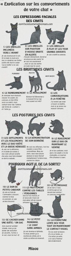 Comment comprendre ce que votre chat essaie de dire « Explication sur les comportements de votre chat »Les humains ont vraiment de la chance. Nous avons la Plus