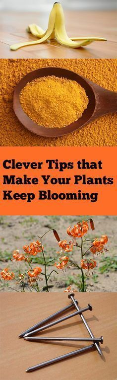 Clever-Tips-that-Make-Your-Plants-Keep-Blooming-1.jpg 400×1,297 pixels