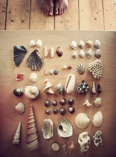 treasures from the sea :)