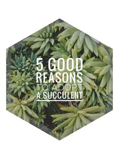 5 Good Reasons to Adopt a Succulent