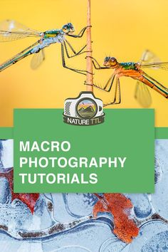 Macro Photography Tutorials: Photography on a Small Scale - These macro photography tutorials will help you improve your macro photos so you can take better photos bugs, insects, leaves, and more! Find out how to take amazing closeup nature photos. Wildlife Photography Tips, Micro Photography, Double Exposure Photography, Levitation Photography, Water Photography, Photography Lessons, Abstract Photography, Photography Flowers, Horse Photography