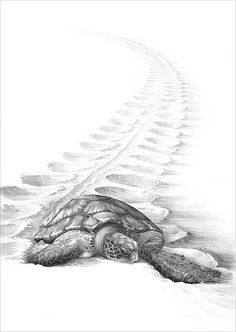 sand and turtle with pencil Pencil Drawings Of Animals, Animal Sketches, Art Drawings Sketches, Sea Turtle Art, Turtle Love, Green Turtle, Sea Turtles, Turtle Sketch, Drawn Art