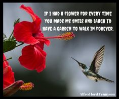 If I had a flower for every time you made me smile and laugh I'd have a garden to walk in forever. Beautiful Flower Quotes, Beautiful Flowers, You Make Me, Make Me Smile, Alfred Lord Tennyson, Smiles And Laughs, Flowers Nature, Flower Delivery, Floral Bouquets