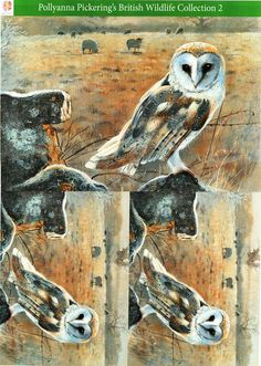 Pollyanna Pickering British Wildlife Collection 2 - traditional decoupage #9 - owl