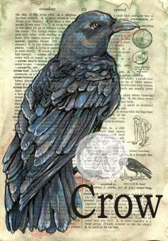 Crow mixed media drawing on children's dictionary - flying shoes art studio