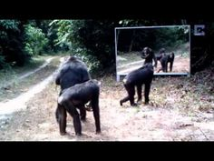 Animals in Mirrors Hilarious Reactions
