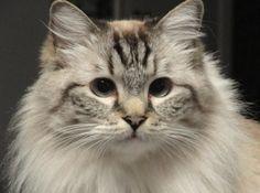 Freekibblekat