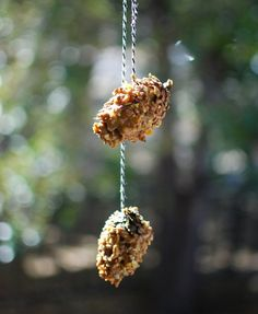 Pinecone Bird Feeders. Materials: string, pinecone, peanut butter, bird feed