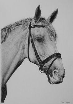 White horse by on deviantART