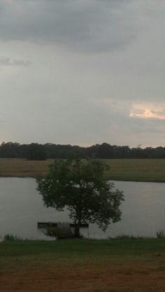 My East Texas backyard 2013...