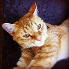 Instagram - cat