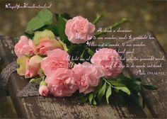 Psalm 139:14-15 Ik dank u daarvoor. Want het is een wonder, zoals ik gemaakt ben. Alles wat u maakt, is een wonder. Dat weet ik heel goed. U hebt me al gezien toen ik in het geheim gemaakt werd. U hebt me al gezien toen ik diep in de aarde ontstond. Psalm 139:14-15  #Bemoediging, #Dankbaarheid, #Liefde  https://www.dagelijksebroodkruimels.nl/psalm-139-14-15/
