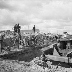 THE LIBERATION OF BERGEN-BELSEN CONCENTRATION CAMP, APRIL 1945. German SS guards and a bulldozer fill in a mass grave.