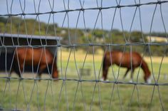 Horse Net Fabric manufacturer from Australia