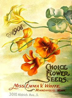 1908 Choice Flower Seeds - Choice flower seeds / - Biodiversity Heritage Library