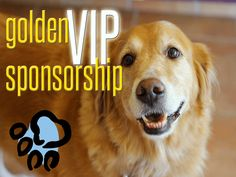 Golden Retriever Rescue Resource - Adopt A Golden Retriever Rescue Golden Retriever Rescue, Toledo Ohio, Left Alone, Dog Show, Rescue Dogs, Puppies, Pet Adoption, Vip, Cubs