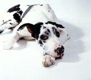 Le chien (islam)