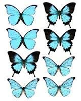 wafer paper butterflies - Google Search