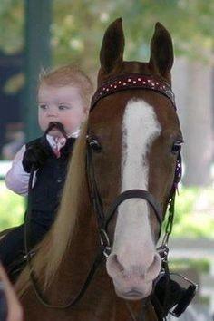 American Saddlebred...How adorable!!!!