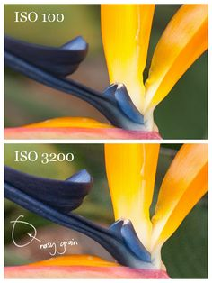 camera tutorial | shutter speed, ISO...