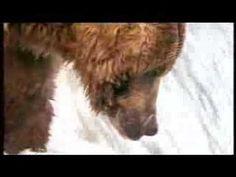 John West Salmon - Bear vs Fisherman