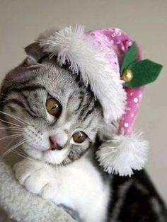 Christmas Animals Postcards for Xmas I Love Cats, Crazy Cats, Cool Cats, Christmas Kitten, Christmas Animals, Merry Christmas, Xmas, Christmas Holidays, Happy Holidays