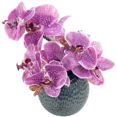 Radiant Orchid (Pantone Color of the Year): Faux Moth Orchid Arrangement