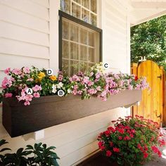 Add Lots of Bold Color. Shade window box..  A swath of impatiens cuts a pretty picture; just a few accent plants -- in orange and white -- add a visual break to a simple window box.  A. Impatiens (Impatiens 'Midnight Rose') -- 4  B. Vinca (Catharanthus 'Cora White') -- 2  C. Snapdragon (Antirrhinum 'Bells White') -- 1  D. Tuberous begonia (Begonia 'Nonstop Orange') -- 1