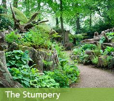 stumpery - Google Search