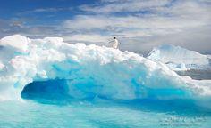 Polar Beauty, Polar Bears, Penguins, and Iceburgs