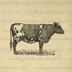 Printable Image Antique Cow Graphic Farm Animal Download Illustration Digital Vintage Clip Art. High resolution, high quality digital image illustration for printing, transfers, pillows, papercrafts, t-shirts, and other great uses. Real vintage artwork. Antique artwork. This image is high quality, high resolution at 8½ x 11 inches. A Transparent background png version is included.