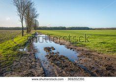 Polder Nederland Stockfoto's, afbeeldingen & plaatjes | Shutterstock