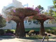 "The Getty Museum used rebar to create a structured trellis - lovely bougainvillea. Try at home on a smaller scale with sweet pea, morning glory, etc. mix in vinca vine and train up the ""branches."""