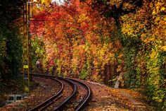 budapest photos in fall Fall Pictures, Wildlife Photography, Vermont, Autumn Leaves, Railroad Tracks, The Good Place, Nature, Happy Things, Beautiful Scenery