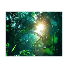 amazon rainforest ❤ liked on Polyvore featuring backgrounds