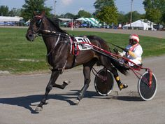 The 2-year-old colt trotter, TT'S Photo Printz and driver Don McKirgan at the 2012 Lorain Co. Fair in Wellington, Ohio.