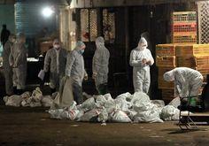 New bird flu strain: Little evidence of global threat so far - Vitals
