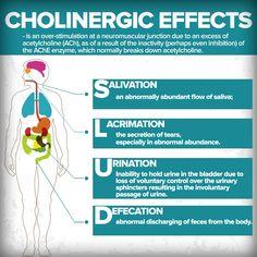 "Cholinergic effects Your gonna ""shit, piss and spit"" Nursing Pneumonics, Nursing School Notes, Nursing Tips, Nursing Programs, Nursing Schools, Np School, Nursing Information, Pharmacy School, Pharmacology Nursing"
