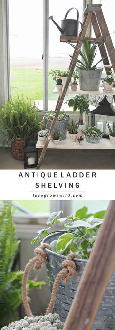Create this ladder shelving to display your photos, plants, and more! Click for tutorial at LoveGrowsWild.com #ad #LetsGro #IfitWatersNowitFeeds