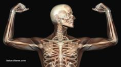 The decline of humanity is clearly evident in bone records, say scientists